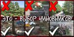 Совесть vs. деньги: в Казачьей бухте Севастополя продолжается вырубка краснокнижных деревьев под многоквартирную застройку