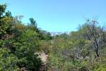 Одно лечим, другое калечим: Севастопольские экологи требуют переноса стройки больничного городка с территории лесопарка краснокнижных деревьев