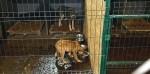 Театр абсурда: Кто доверил юридической компании управлять севастопольским приютом бездомных животных?