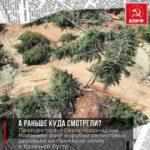 Прокуратура и Севприроднадзор признали факт вырубки реликтовых деревьев на памятной аллее  в Казачьей  бухте